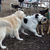PUMPKIN & MADDIE, MARLEY (boy pup), FAITH 2