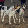 CALI & RUBY (blue tick coonhound)