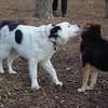 MARLEY (boy pup) & MADDIE 3