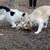 PUMPKIN & MADDIE, MARLEY (boy pup) 3.