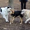 PUMPKIN & MADDIE, MARLEY (boy pup)