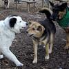 MARLEY (boy pup) & MADDIE, Faith