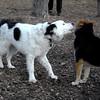 MARLEY (boy pup) & MADDIE 4
