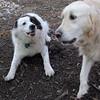 MARLEY (boy pup) & PUMPKIN