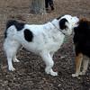 MARLEY (boy pup) & MADDIE 5