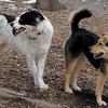 MARLEY (boy pup) & MADDIE 8