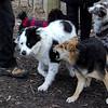 MARLEY (boy pup) & MADDIE 6