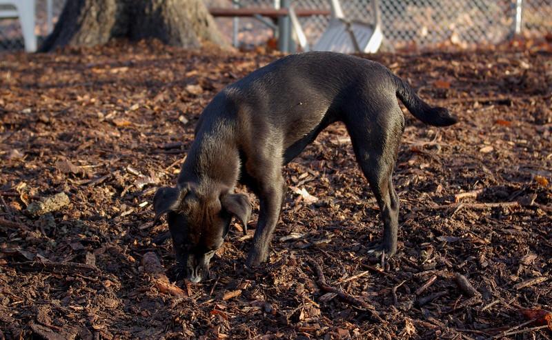 FAITH (terrier)