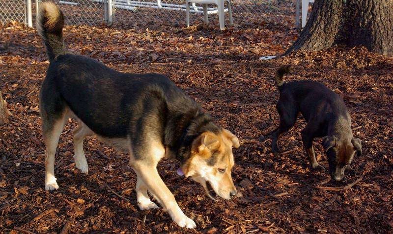 FAITH (terrier), MADDIE