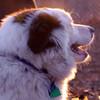 MARLEY (boy pup)