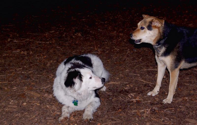 MARLEY (boy pup) & MADDIE.