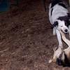 MARLEY (boy pup) & MADDIE