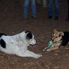 MARLY (boy pup), MADDIE