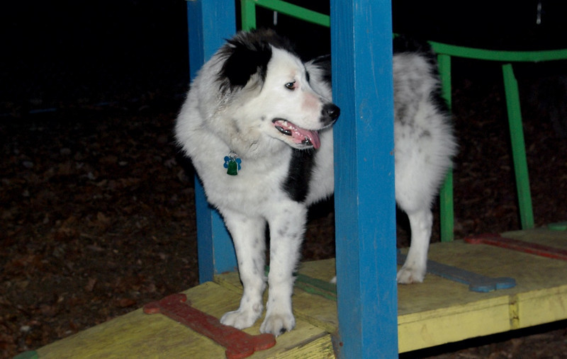 MARLY (boy pup)