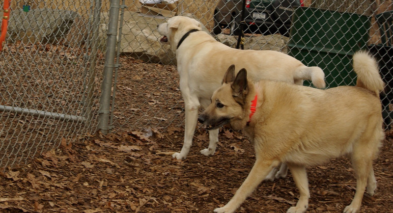 winston (lab), Buster (new shepherd)