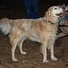 SAMANTHA (golden)