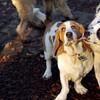 MARLY (boy pup), mack