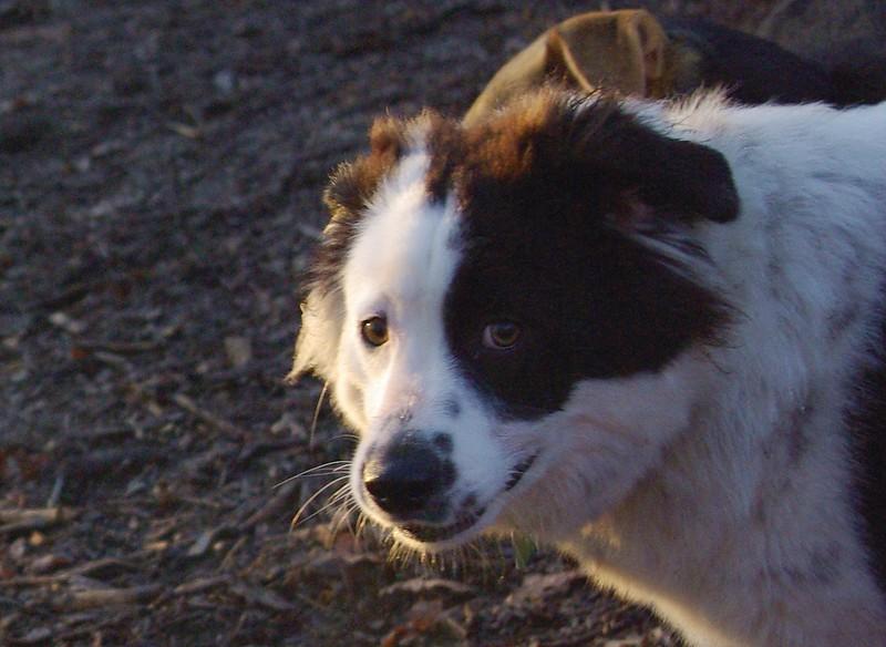 MARLY (boy pup) 2