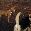 MOCHA (pitbull pup), Maddie