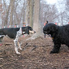 RUBY (blue tick coonhound), MOBY (portuguese waterdog)