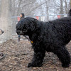 MOBY (portuguese water dog) & Ruby (coonhound)