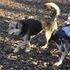 Maddie, Ruby (coonhound)