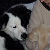 OBERON, MARLEY (boy pup)