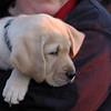 OBERON (icarus son, guide pup)