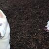 MARLEY (boy pup), CARTIER 2