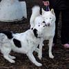 MARLEY (boy pup), CARTIER