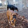 HARLEY (boxer), Rex (hound)