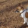 ROLLIE (new boy)