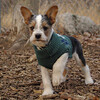 BRUISER (yorkie jack russell puppy).jpg