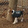 BRUISER (puppy) 2.jpg