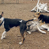 BUD, SIMBA, MADDIE 3.jpg
