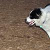 MARLEY (boy pup) 3