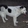MARLEY (boy pup), MADDIE 2