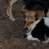 MARLEY (boy pup), MADDIE 3