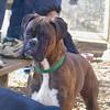 AXEL (boxer) 7