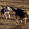 MADDIE & BUD (budd, bull terrier mix) 5