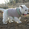 SAMBUCCA (sweater by Paula)