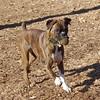 AXEL (boxer) 4