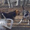 MADDIE & BUD (budd, bull terrier mix) 3