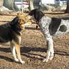 MADDIE & RUBY (blue tick coonhound)