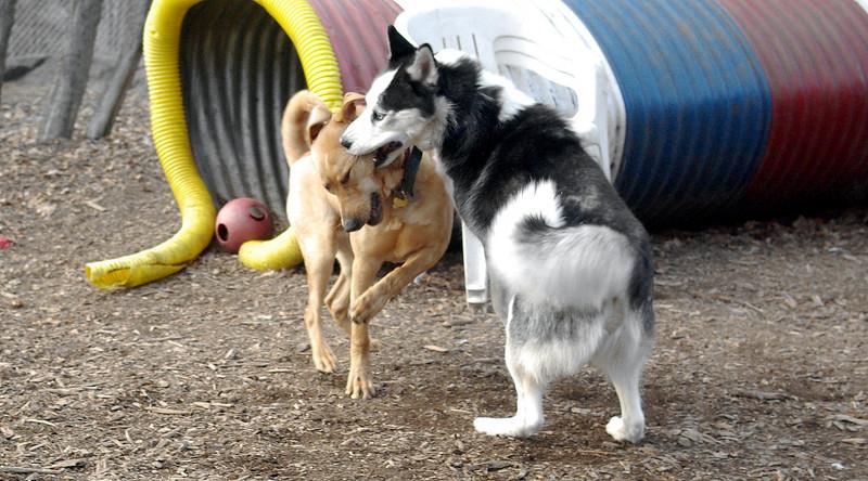 CASEY & MAX (husky maxx)