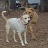 ROSIE (of Skye & Rosie)