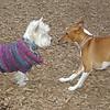CHLOE (basenji), Isabella (sweater)