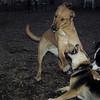 BUFFY & MADDIE, Marley (boy pup)