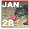 DORA (jan 28 cover)