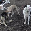 MARLEY (boy pup) , Maddie, Lucy